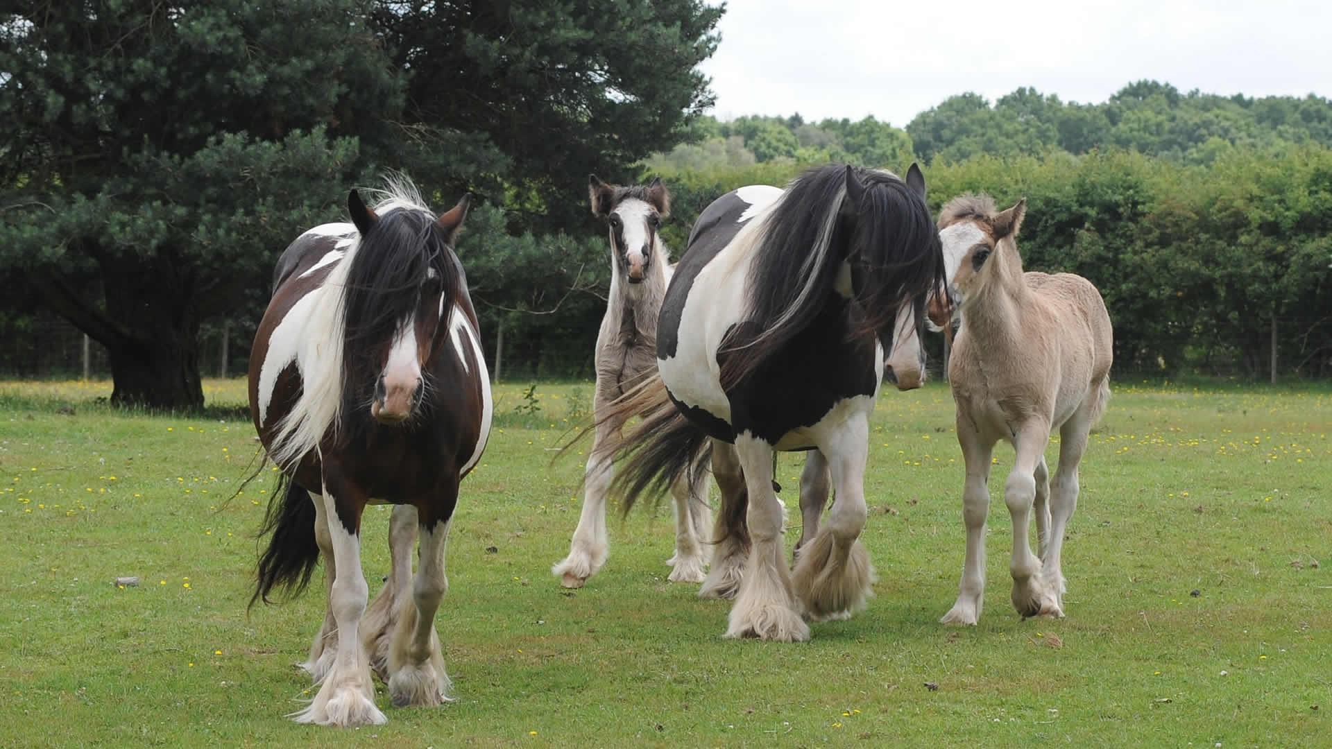 Our local horses